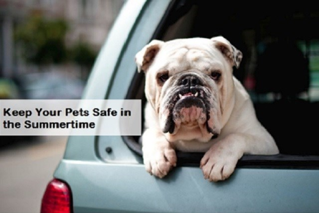 Keep your pets safe.jpg